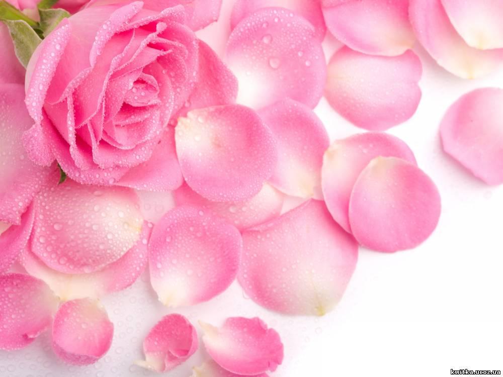 Картинки для мамы цветы 2
