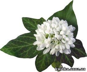 Підсніжники - Фотокліпарт png - Картинки PNG з квітами - Картинки ...